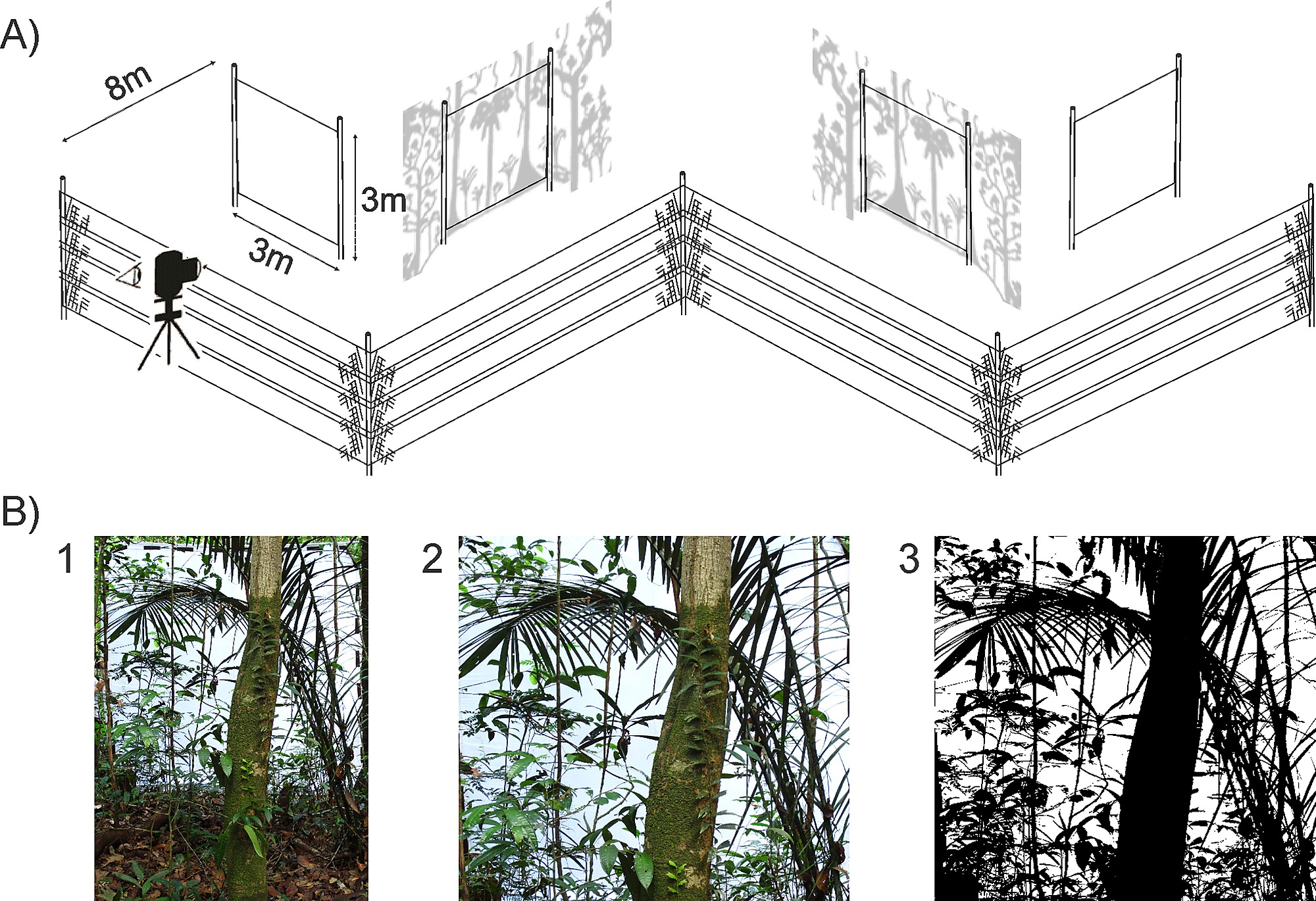 Ground Vegetation Clutter Affects Phyllostomid Bat Assemblage Detector Schematics To Make A Schematic Illustration Of Digital Photographs Used Quantify The Understory In Each Sample Plot
