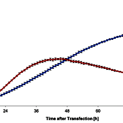 Comparison of transient plasmid based expression in Hi5 cells with