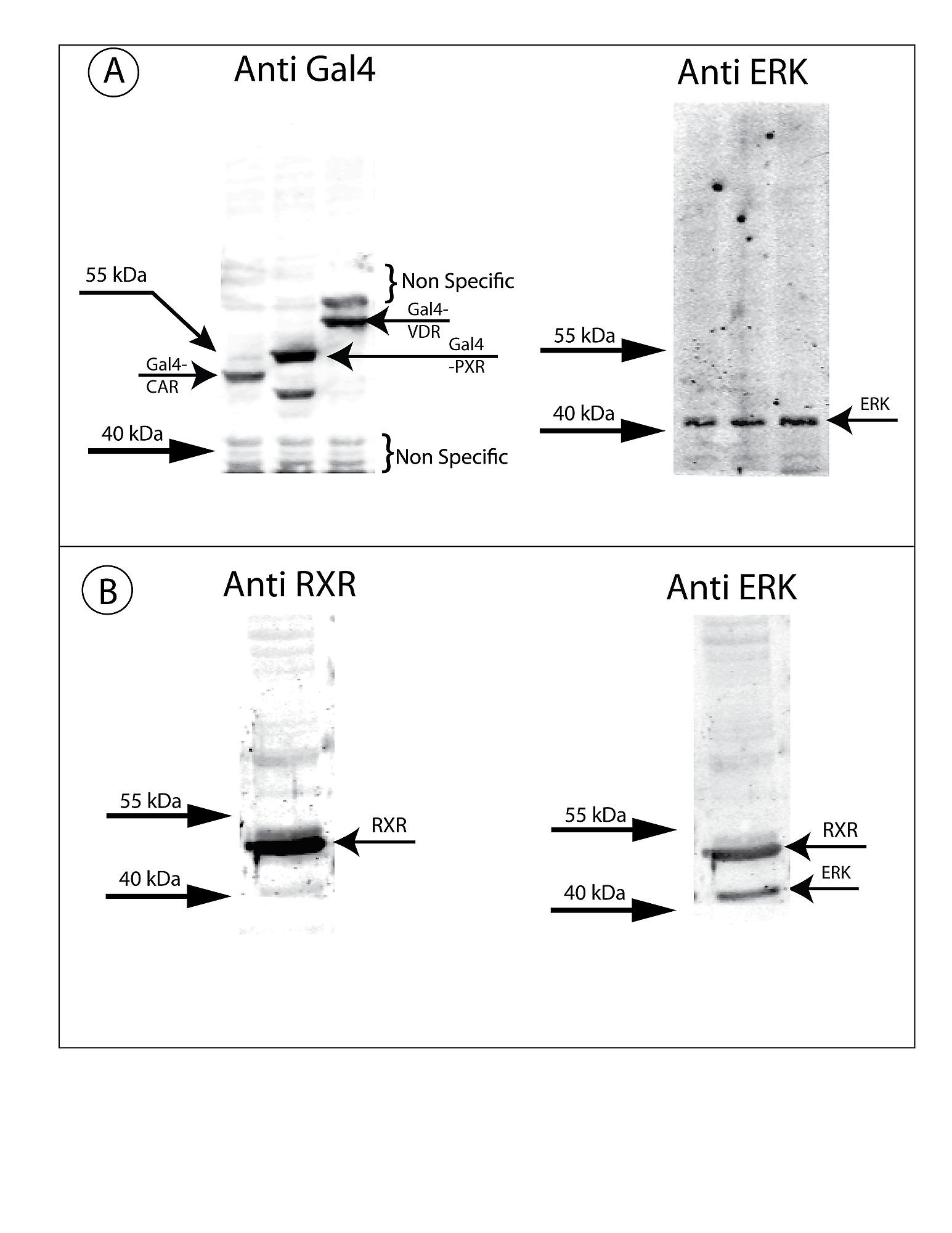 Pure garcinia cambogia extract et cleanse catalyst plus picture 2