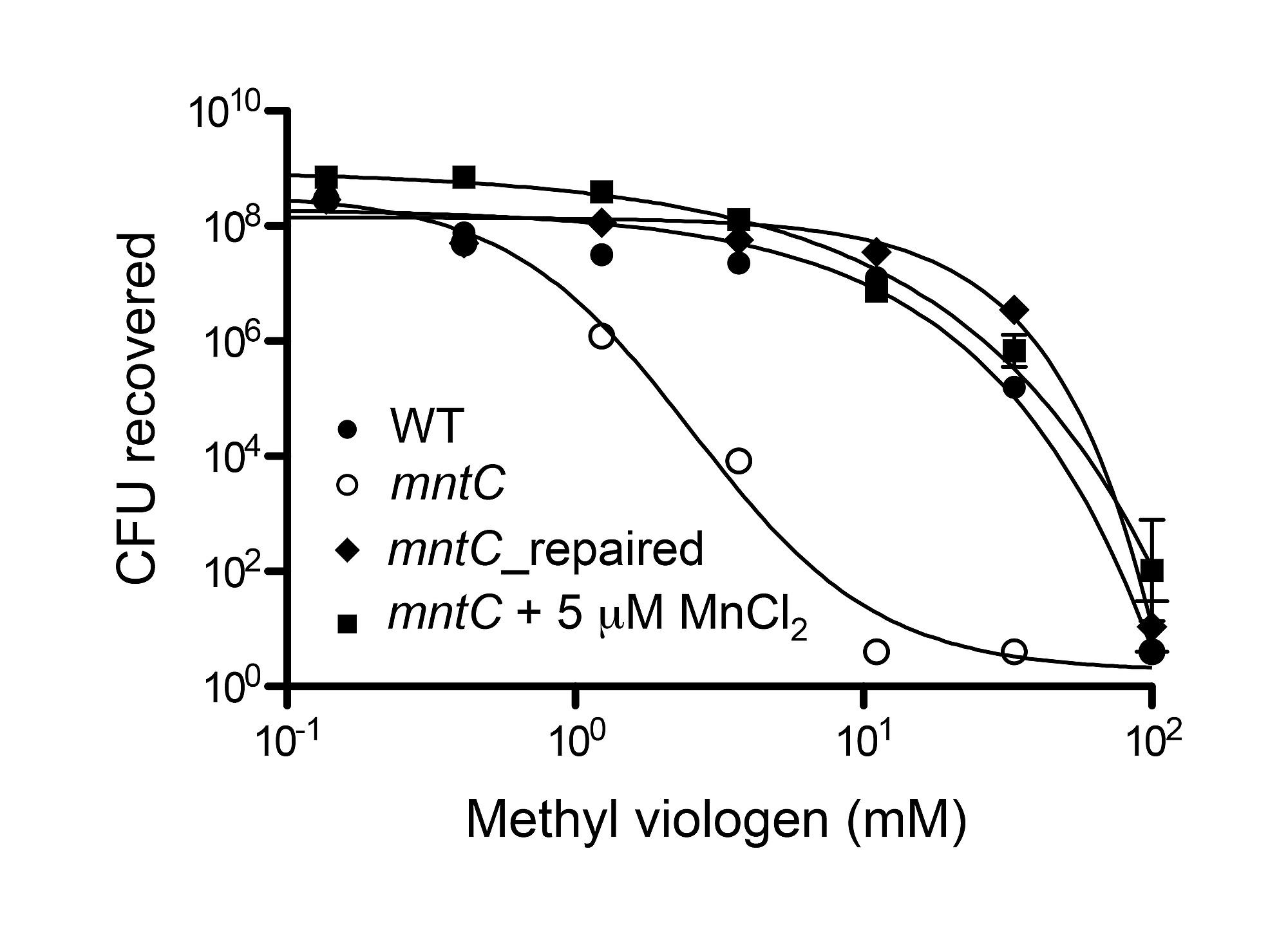 The Staphylococcus Aureus Abc Type Manganese Transporter Mntabc Is