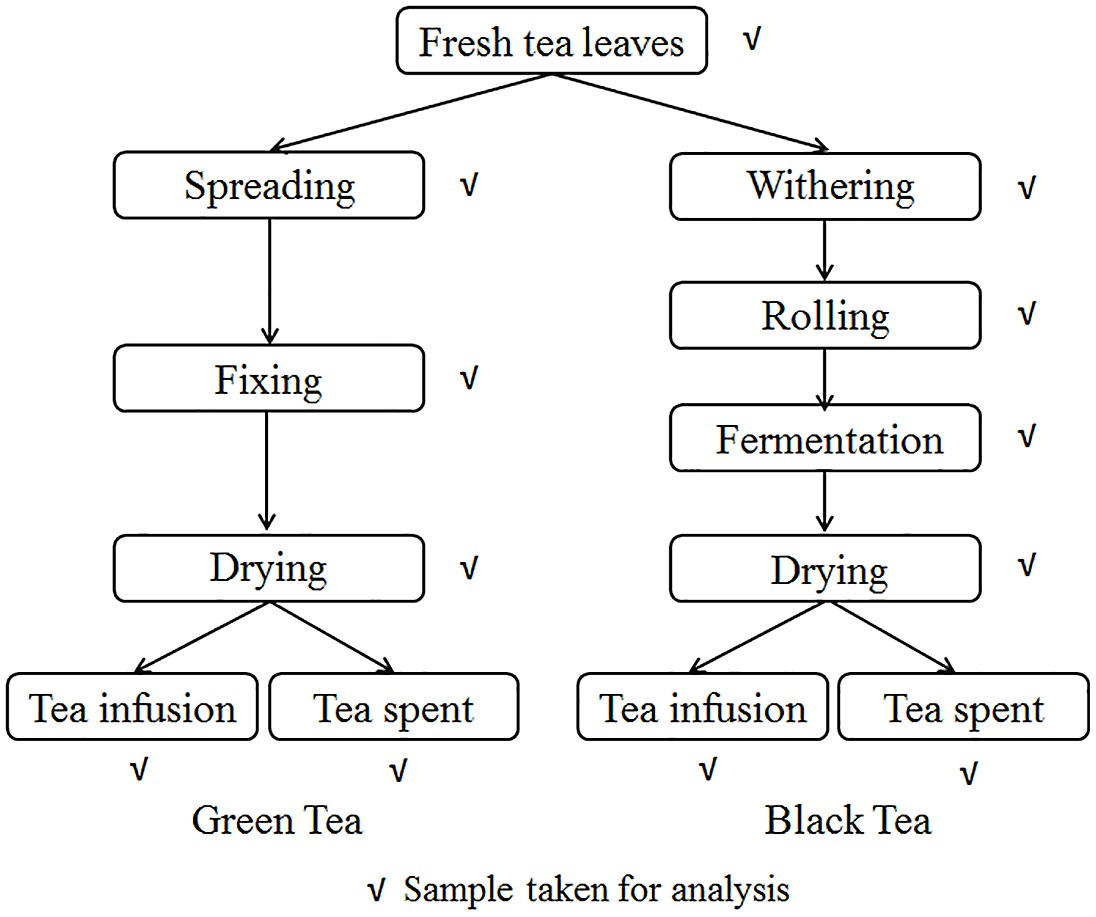 The Flow Chart Of Traditional Manufacturing Process Of Green Tea And