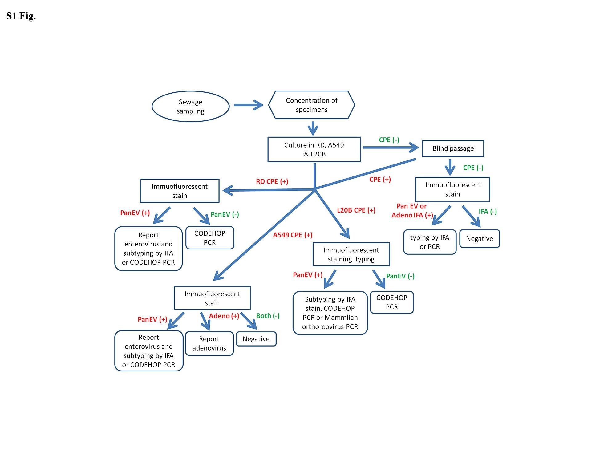 High incidence of mammalian orthoreovirus identified by the flow chart of the virus isolation and identification nvjuhfo Gallery