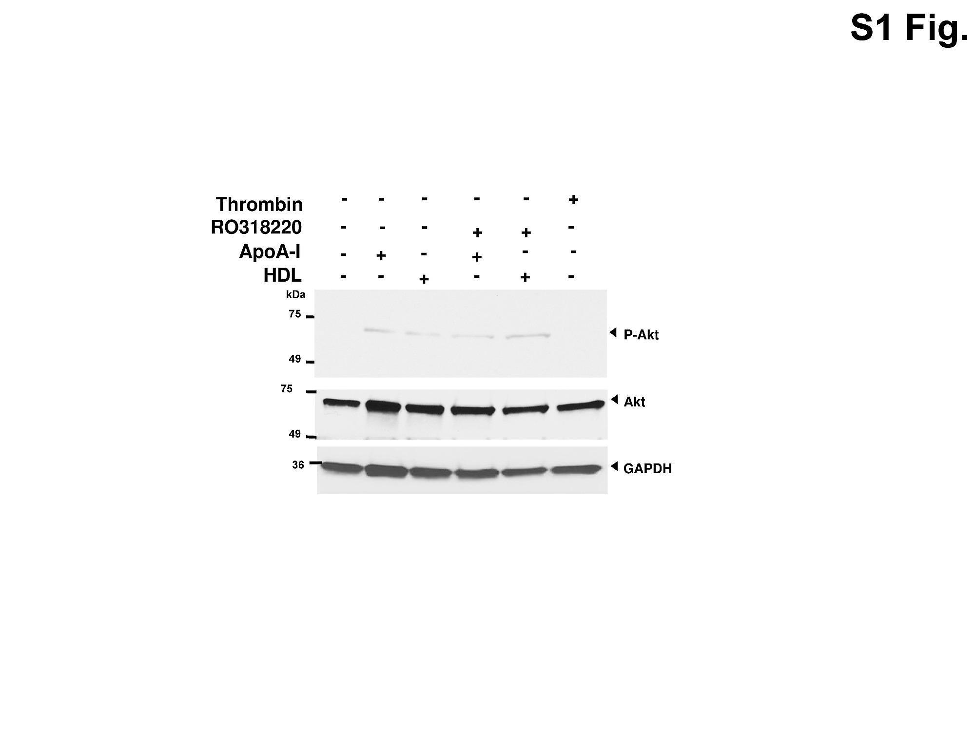A Novel Anti Inflammatory Effect For High Density Lipoprotein