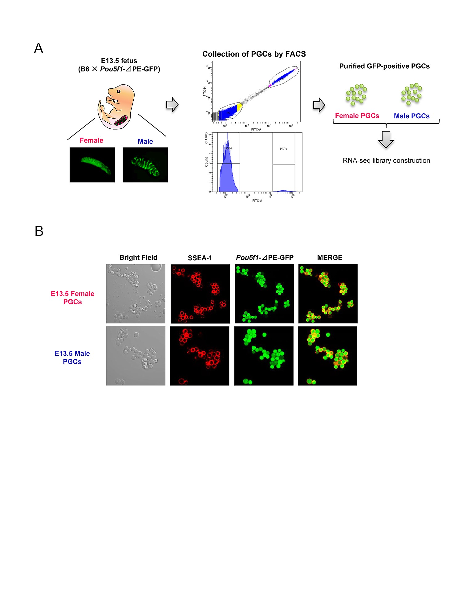 Sex Specification And Heterogeneity Of Primordial Germ Cells In Mice Circuit Medic 2013110 Base Board Repair Kit Figshare