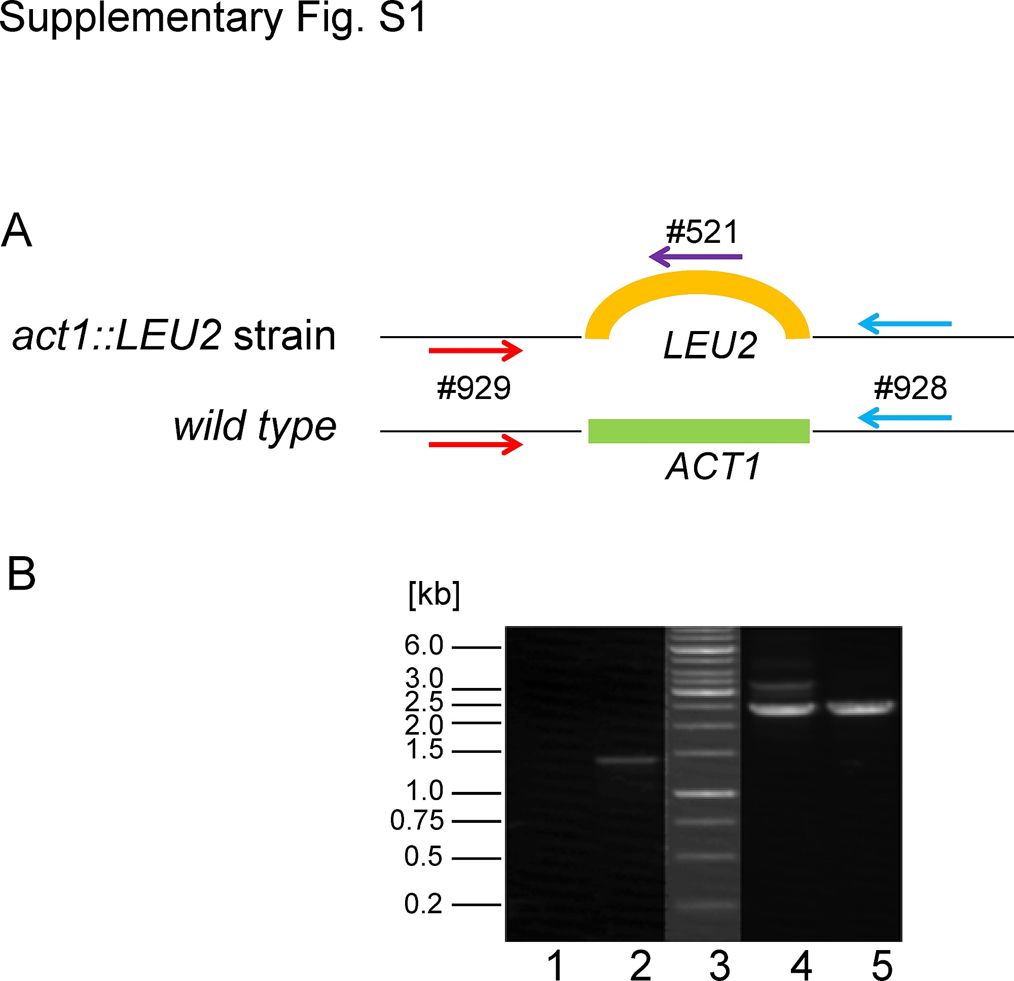 Roles of Asp179 and Glu270 in ADP Ribosylation of Actin by