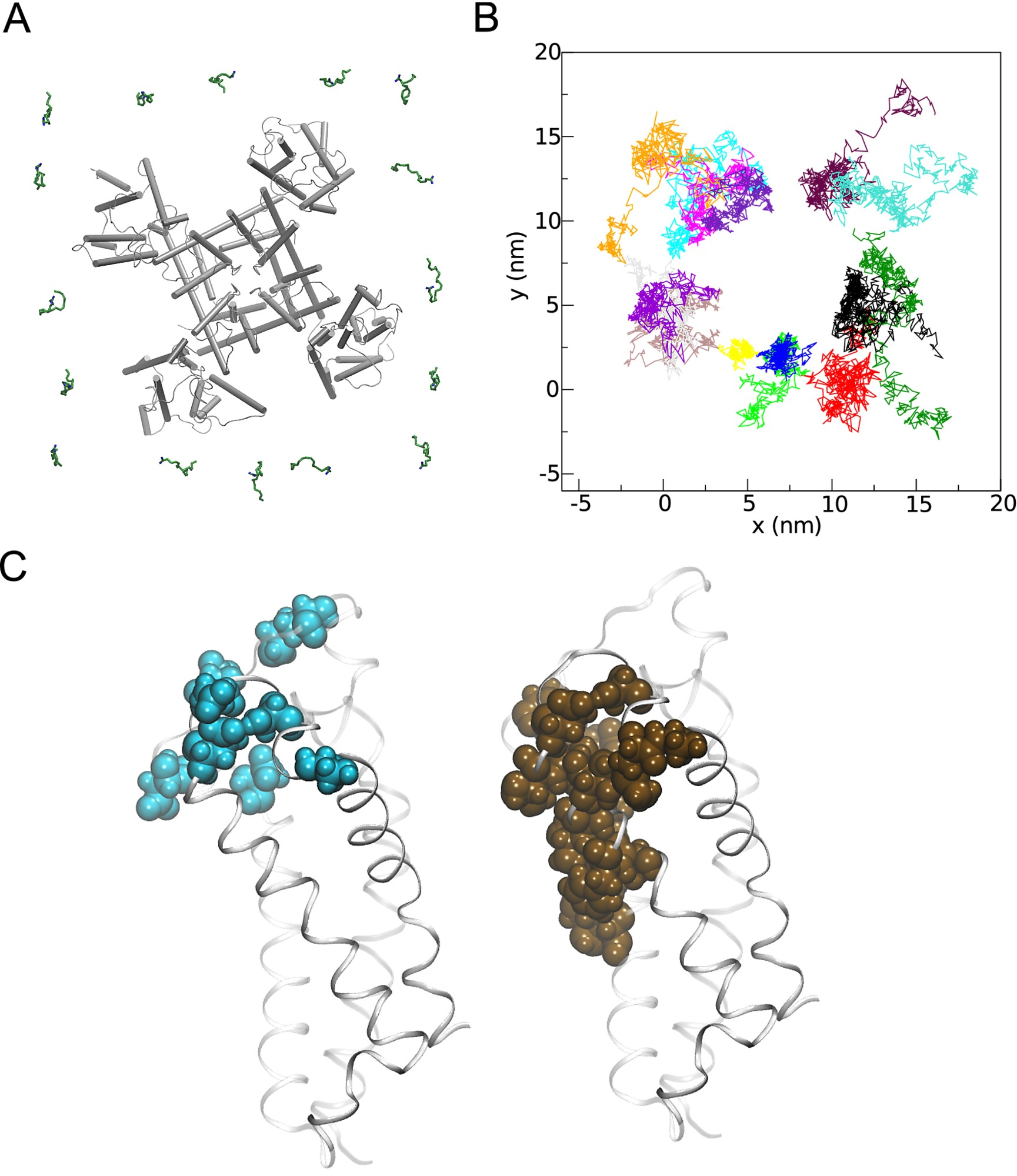 The Molecular Basis of Polyunsaturated Fatty Acid Interactions