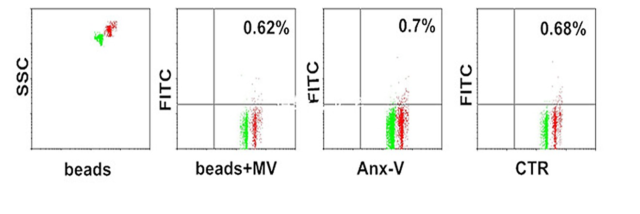Surface phosphatidylserine is responsible for the internalization on mvs derived from non hypoxic cells were conjugated with aldehydesulfate latex beads and reacted with anx v fitc ccuart Image collections