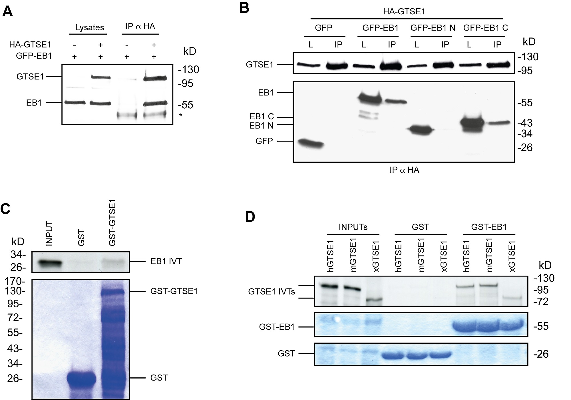 GTSE1 Is a Microtubule Plus-End Tracking Protein That