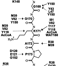 Investigation of the Acetylation Mechanism by GCN5 Histone