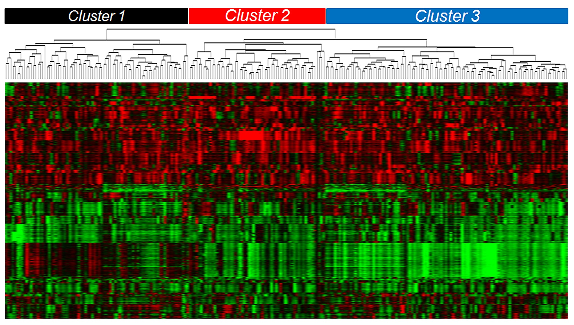 Genome Wide DNA Copy Number Analysis of Serous Type Ovarian ...