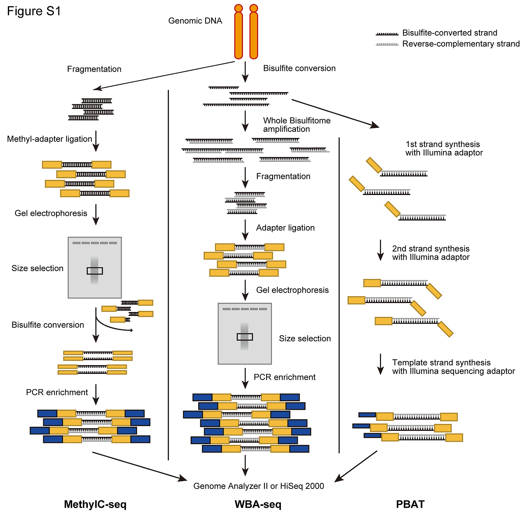Contribution of Intragenic DNA Methylation in Mouse Gametic