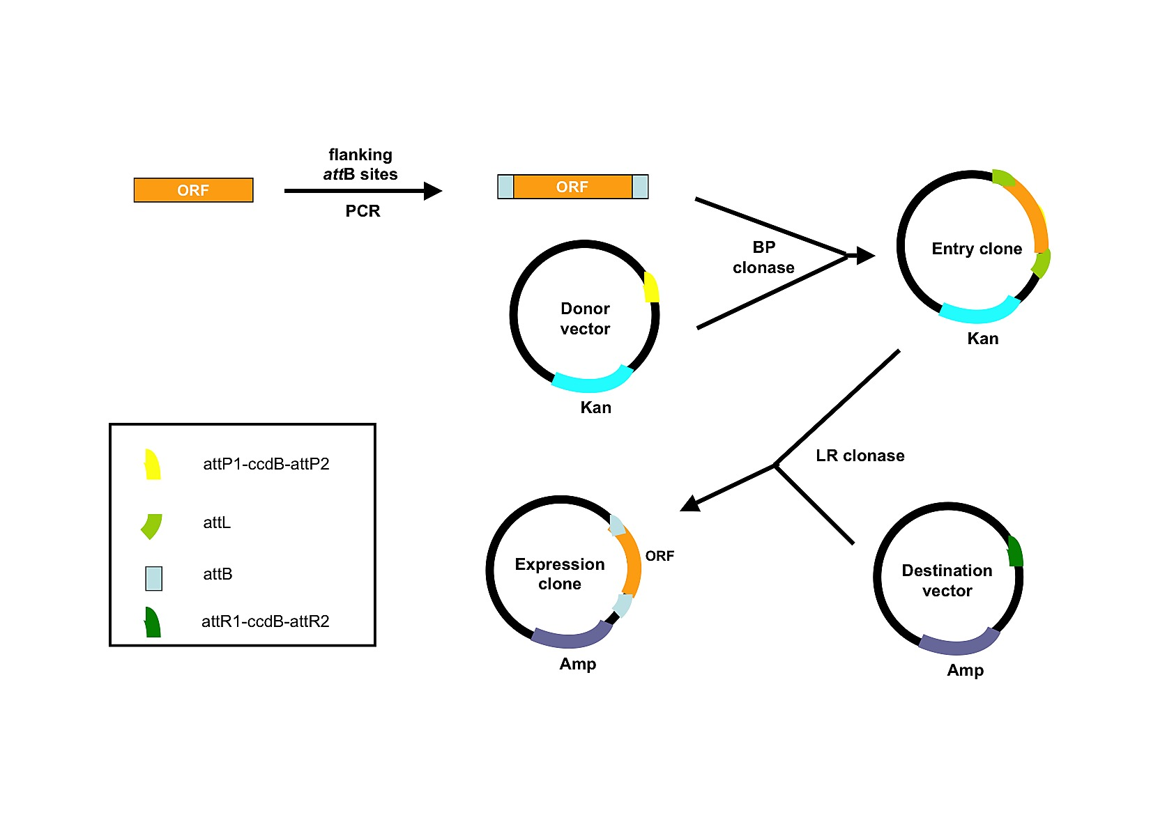 Heterologous Expression of Membrane Proteins: Choosing the