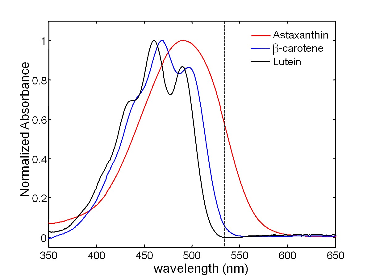 absorption spectra The basic difference between emission and absorption spectrum is, as the name suggests, emission and absorption of light sounds simple but there's more to it.