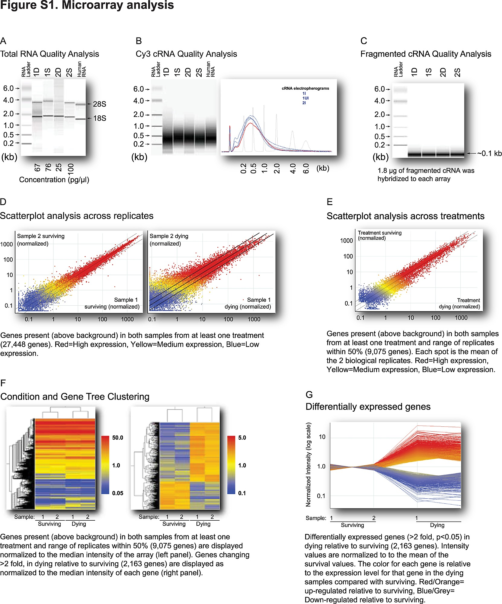 Influence of Stochastic Gene Expression on the Cell Survival