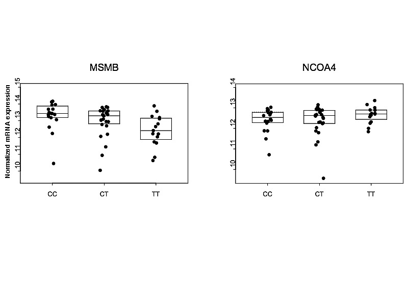 Analysis of the 10q11 Cancer Risk Locus Implicates MSMB and