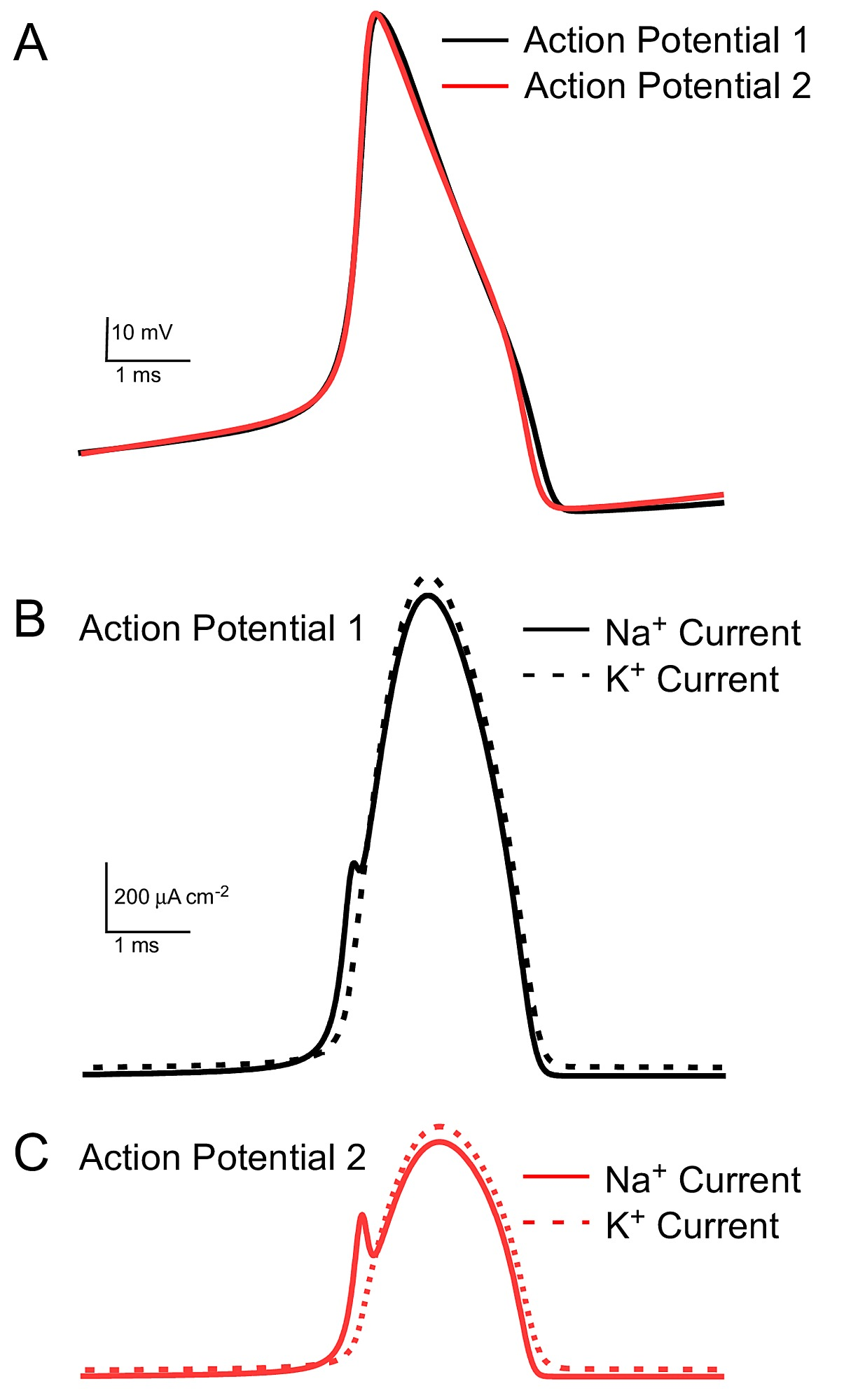 Action Potential Energy Efficiency Varies Among Neuron Types In Orbit Pump Start Relay Wiring Diagram Figshare