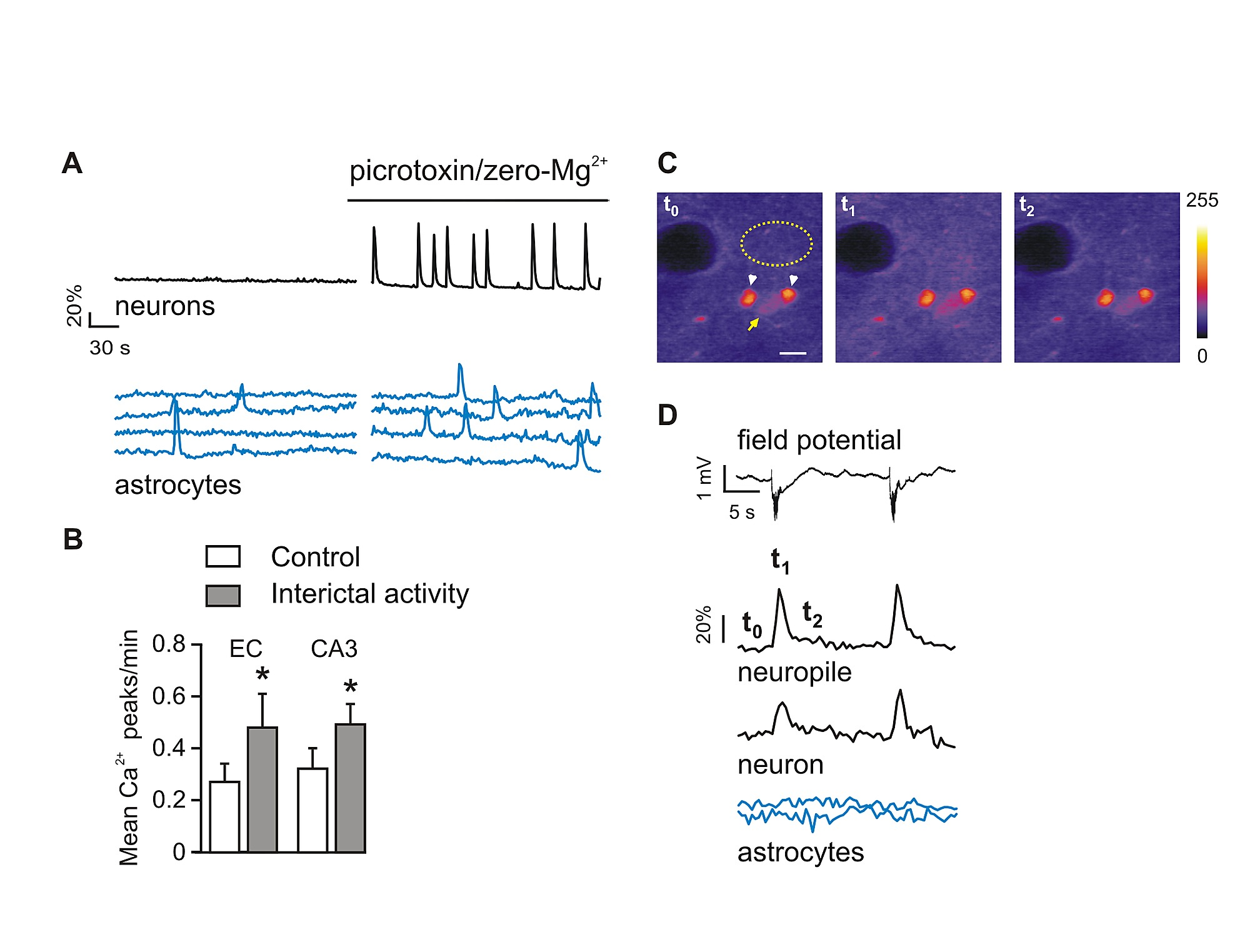 An Excitatory Loop With Astrocytes Contributes To Drive Neurons Electric Circuit Diagram Latex Figshare
