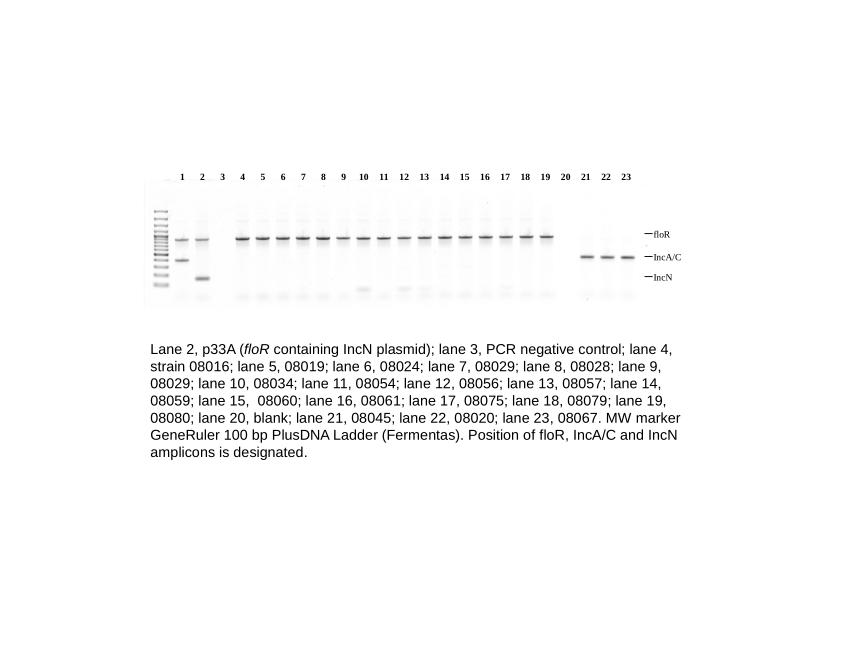 High Prevalence Of Multidrug Tolerant Bacteria And Associated