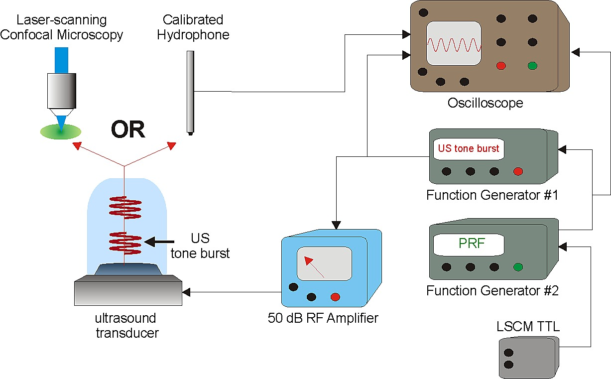 Remote Excitation Of Neuronal Circuits Using Low Intensity Generator Circuit And Ultrasonic Buy Figshare