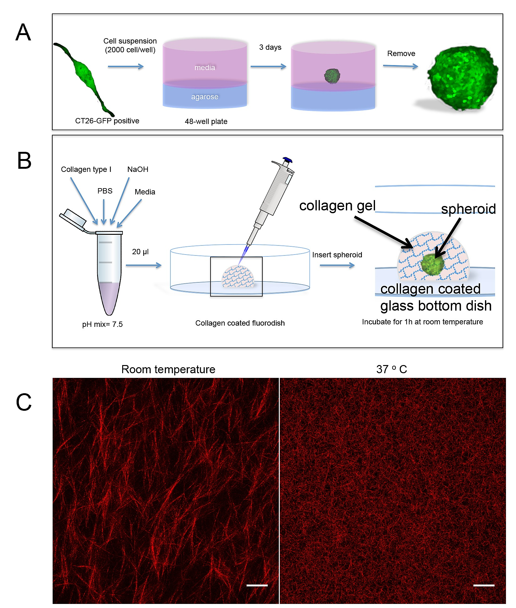 Tensile Forces Originating From Cancer Spheroids Facilitate Tumor Figure 9 Traction Generator Field Wiring Diagram S1 Fig Methodology Of The 3d Invasion Assay