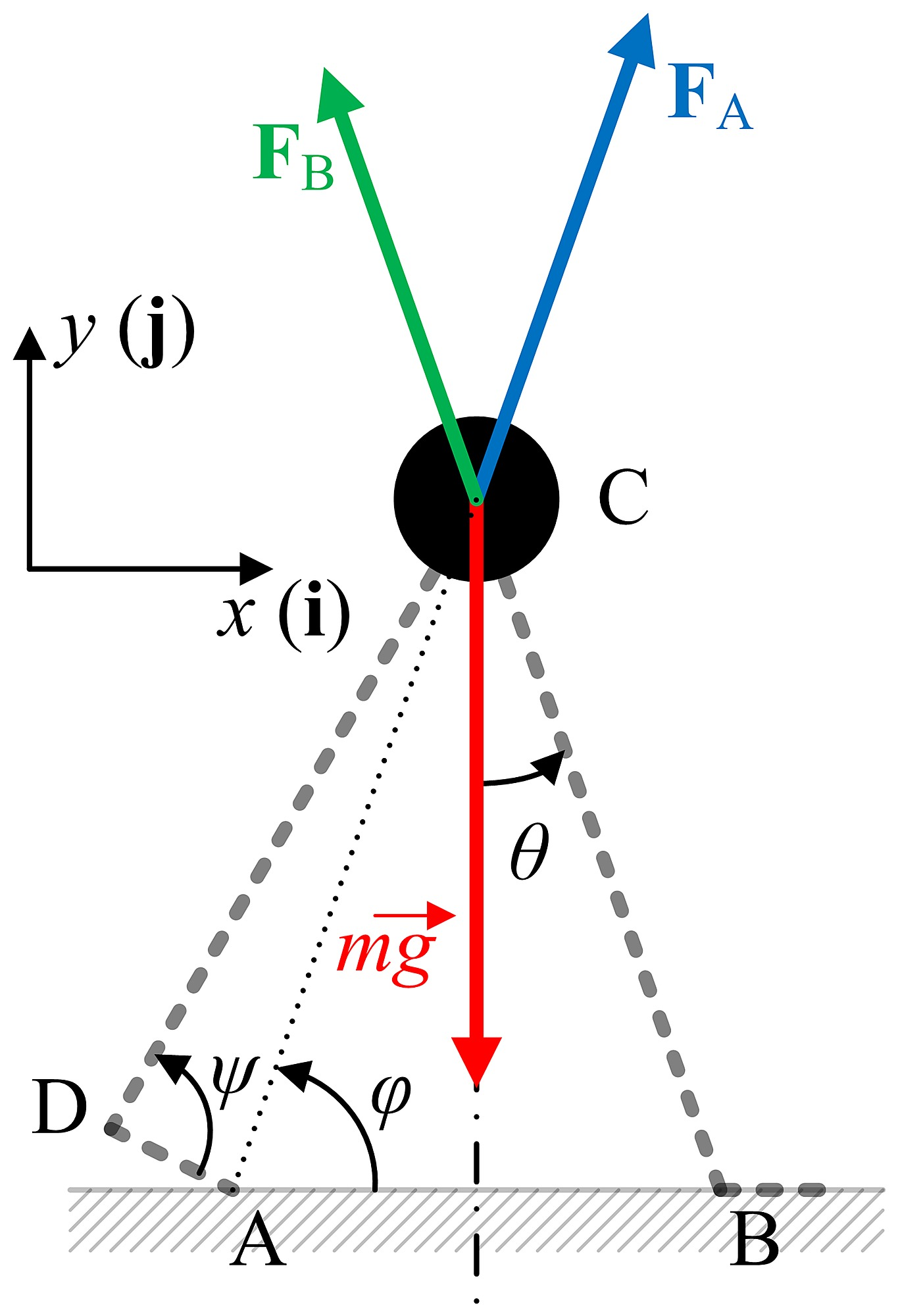 A free body diagram of the model during double stance ccuart Images