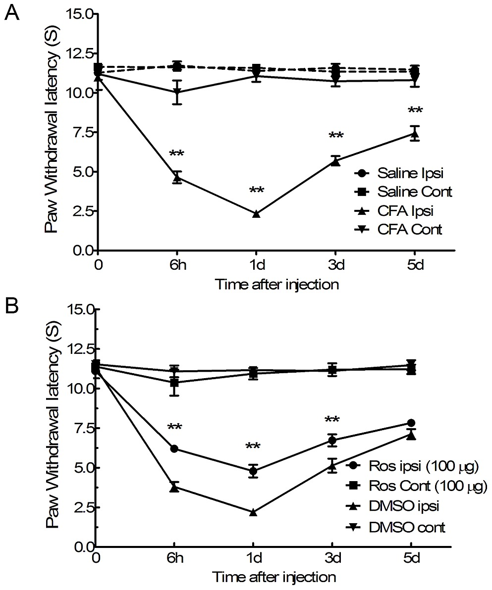 Heat hyperalgesia induced by intraplantar injection of CFA was