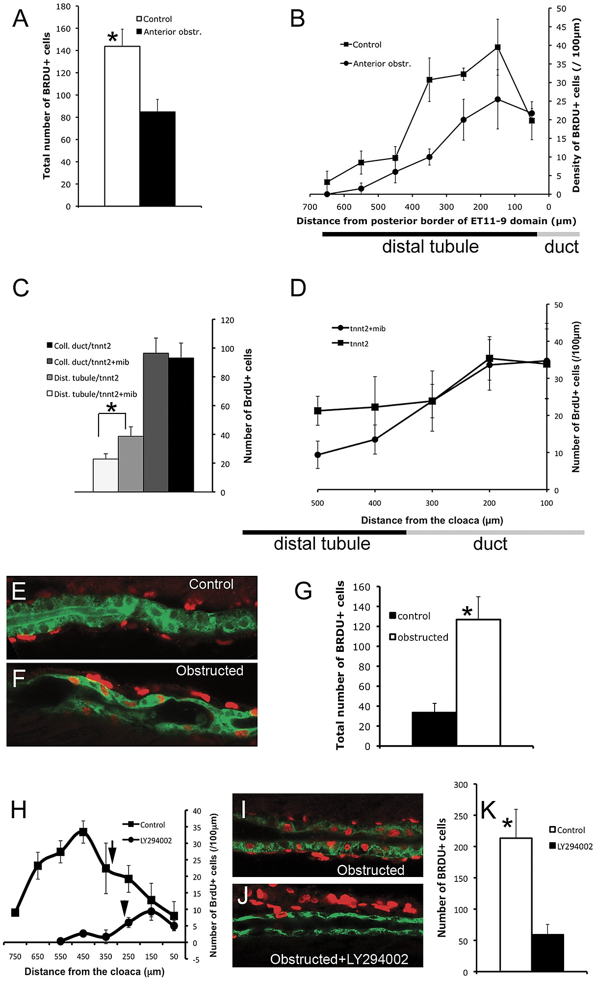 Collective Epithelial Migration Stimulates Cell Proliferation In The