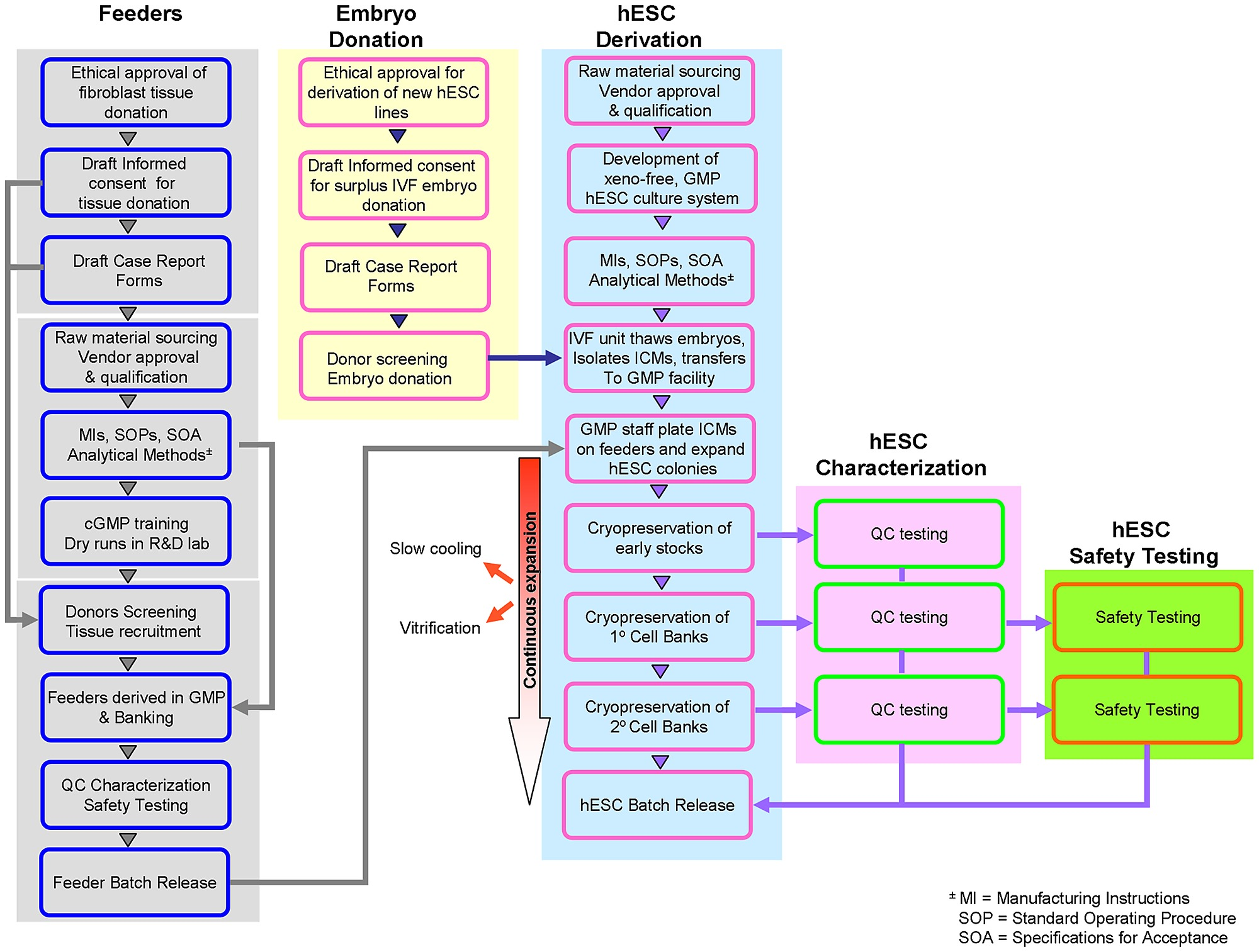 Process Flow Diagram Of The Approach Taken In Deriving Xeno Free Training Clinical Grade Fibroblast Feeders And Hescs