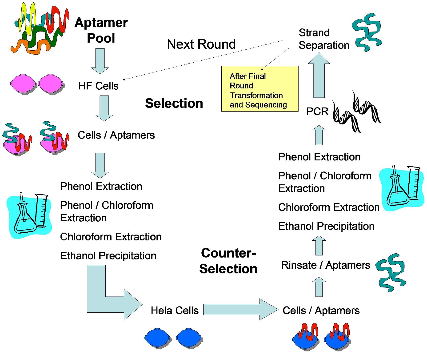 Schematic of Adherent Cell-SELEX (AC-SELEX) Procedure