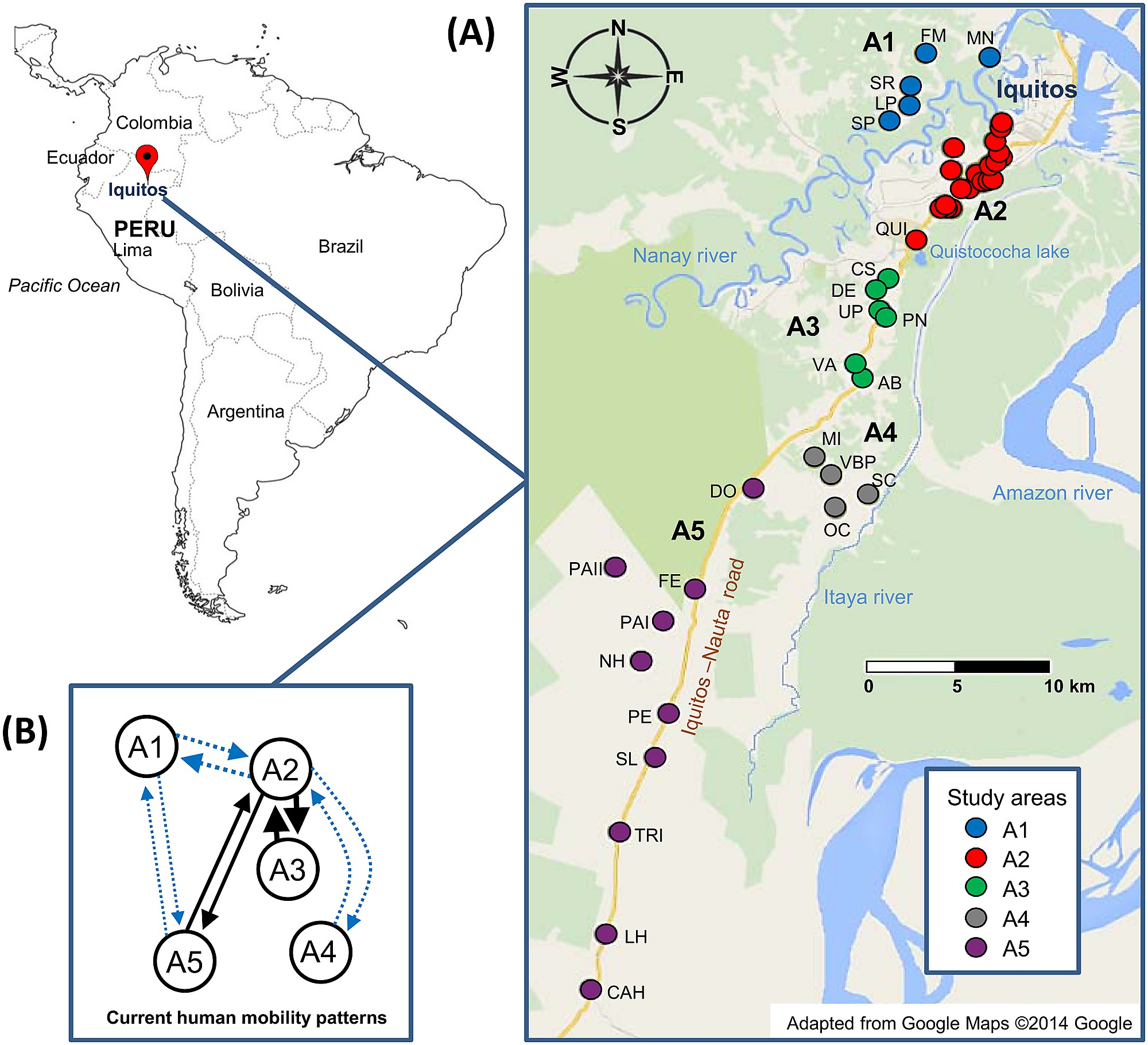 Population Genetics of Plasmodium vivax in the Peruvian Amazon