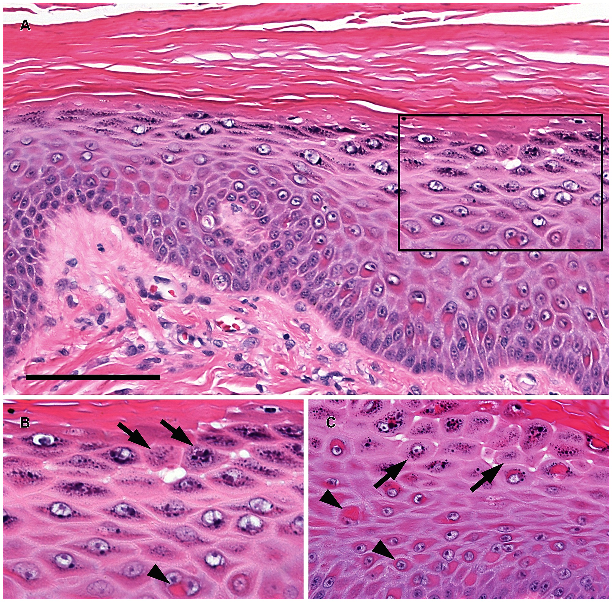 Histopathology findings for 3-month-old puppies with
