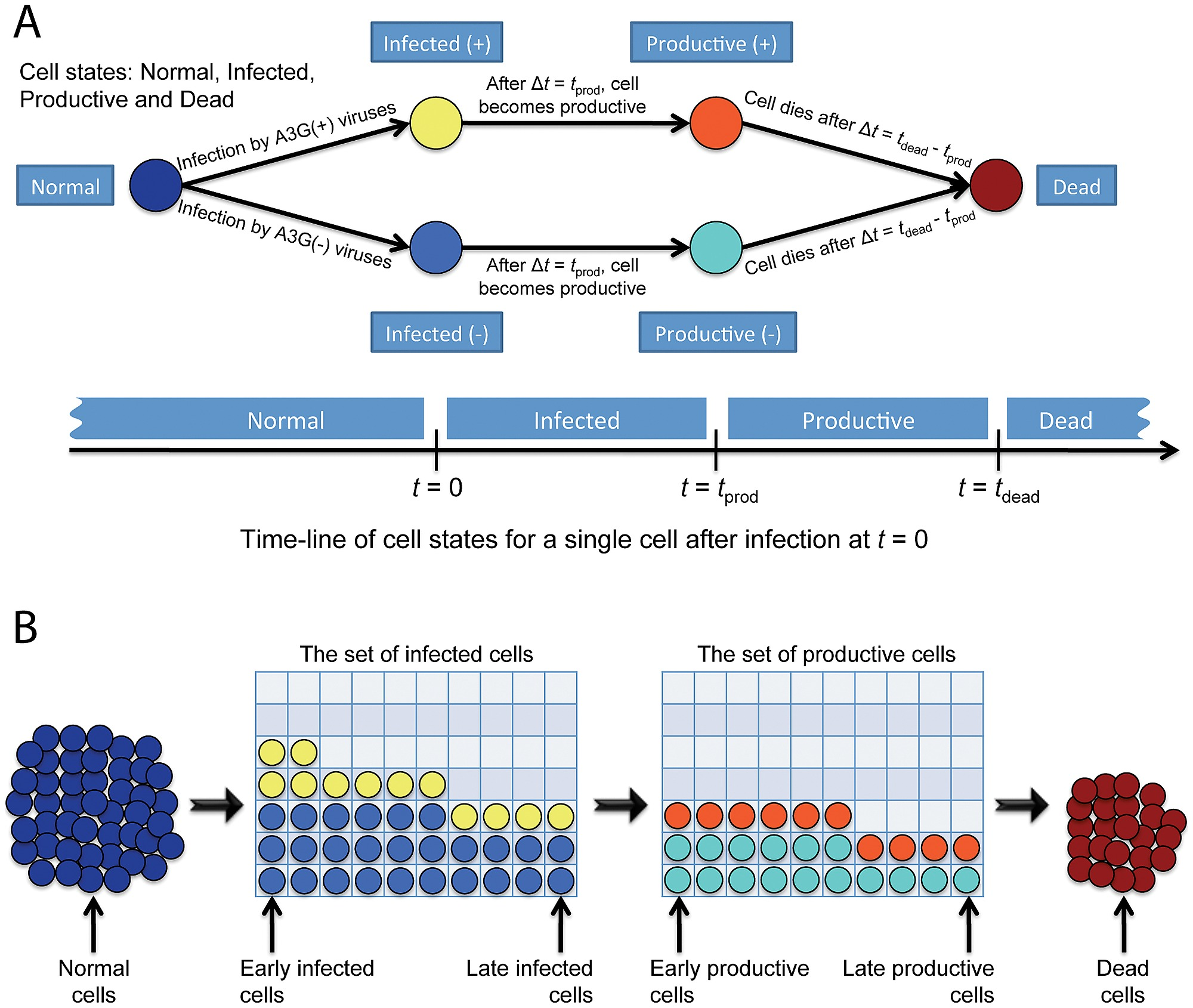 A Schematic Diagram Of Cell States And Snapshot The Circuit Multicellular Model