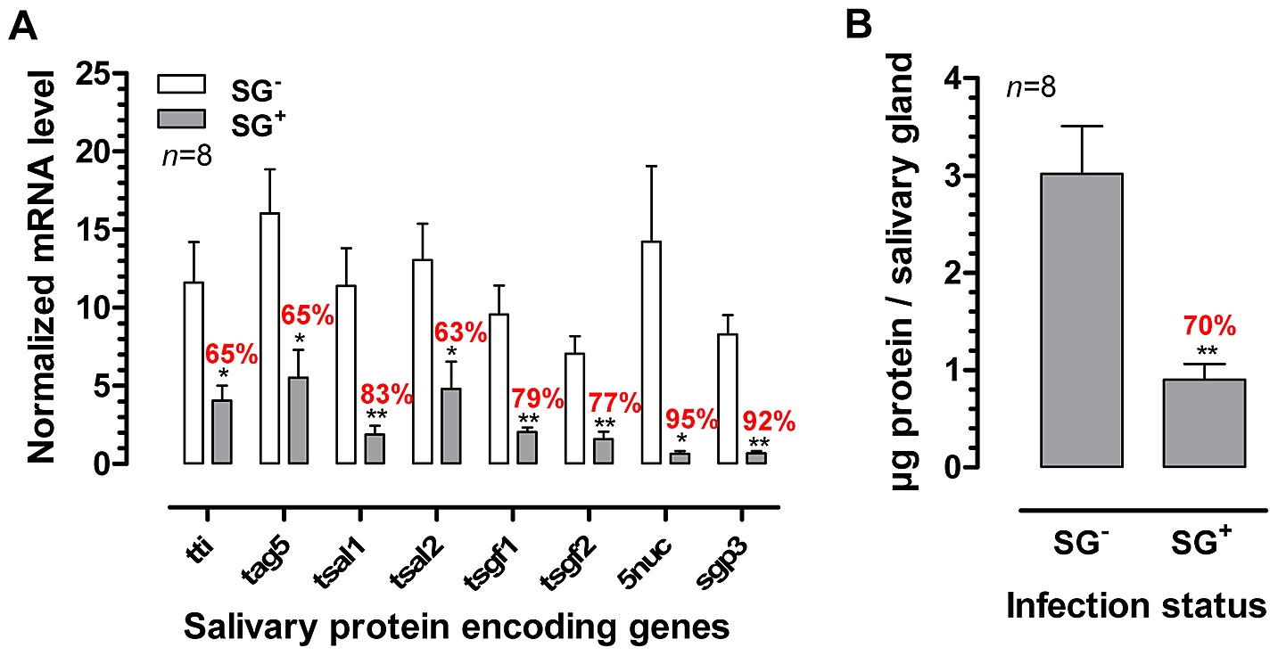 effects of the t  brucei salivary gland infection on tsetse fly salivary  protein expression