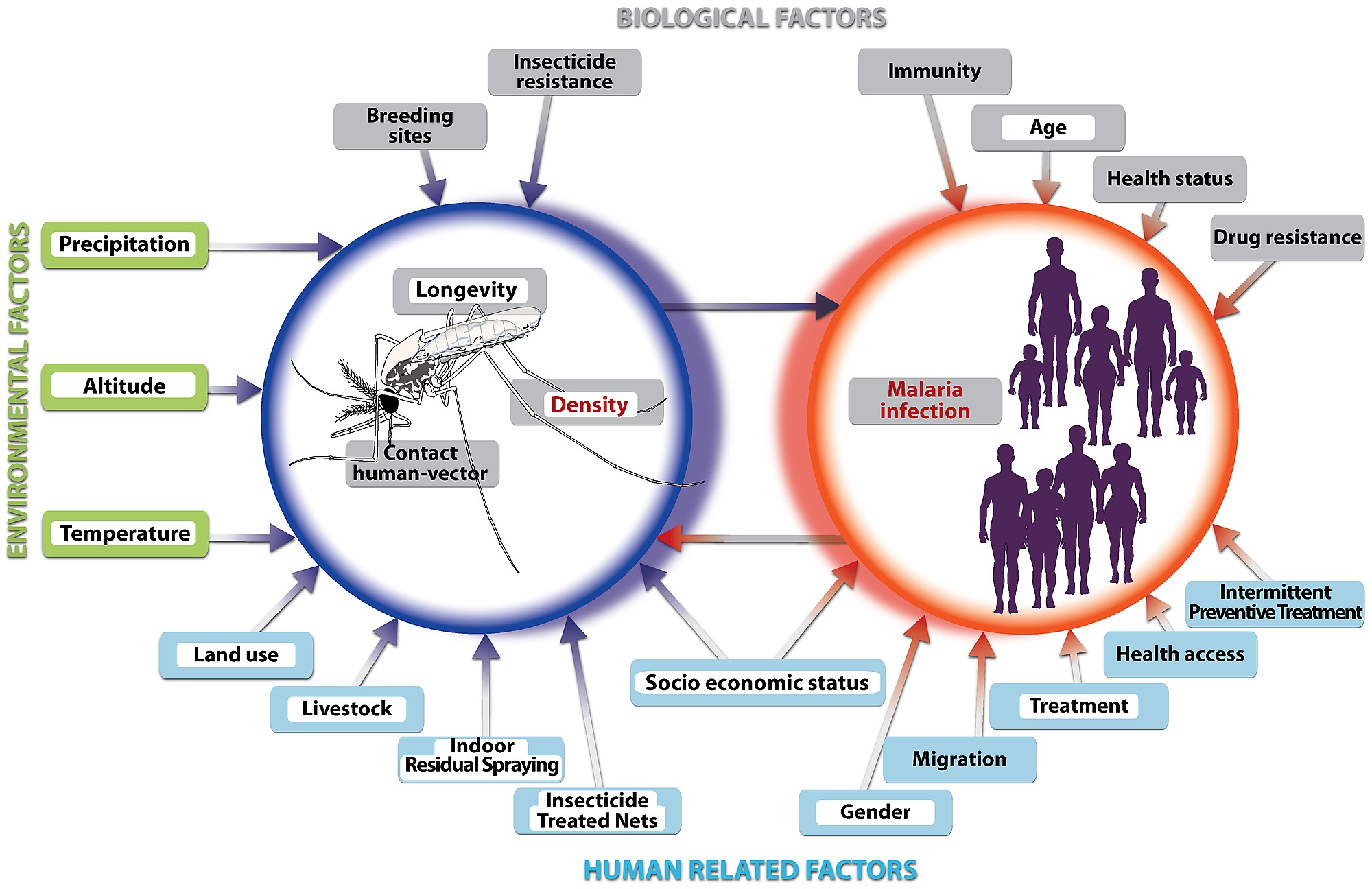 Environmental Factors As Important As >> Conceptual Model Of Important Risk Factors Affecting Malaria