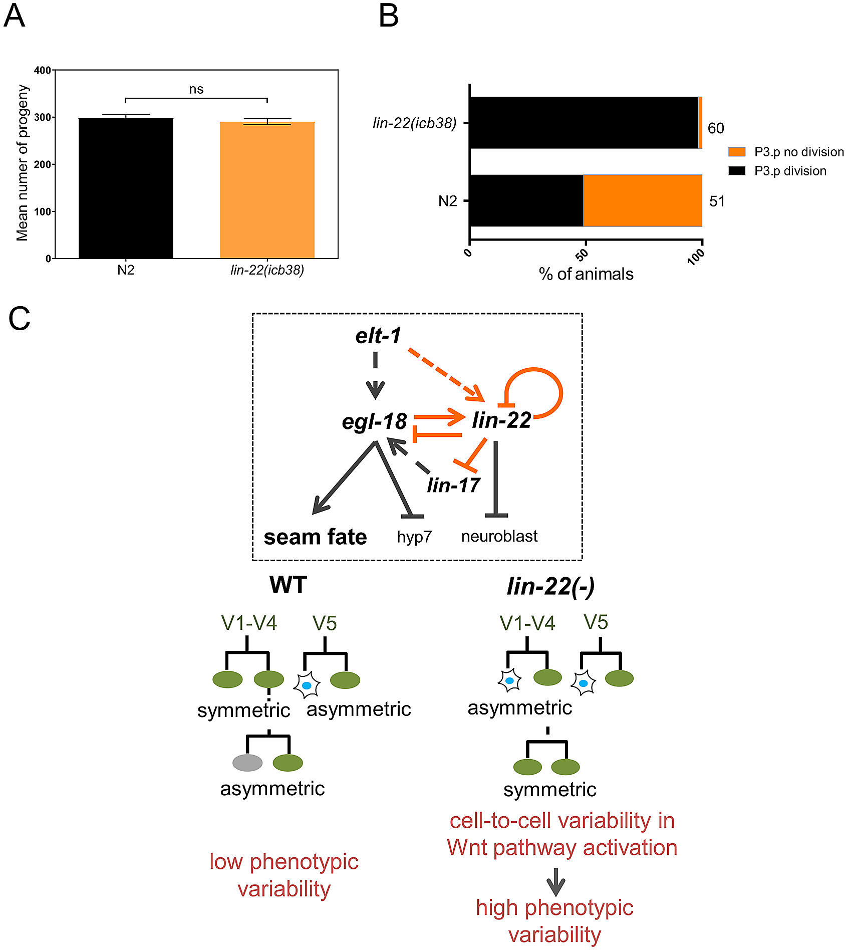 Context-dependent gain and loss of variability in lin-22