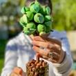 Personalised Chocolate Apple Sweet Tree