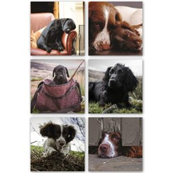 Working Dogs Coasters - Set of Six