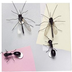 Insect Fridge Magnets
