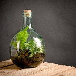 Make Your Own Terrarium: Plant Bottle and Starter Kit