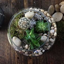 Terrarium Workshop with Prosecco for 2