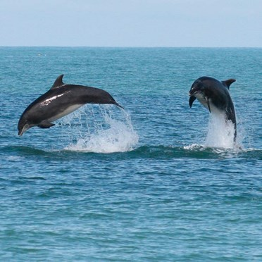 Dolphin Watching for 2