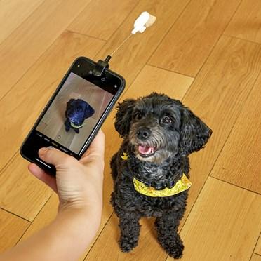 Dog Selfie Clip