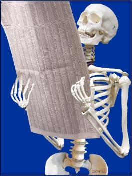 Skeletal_News.jpg