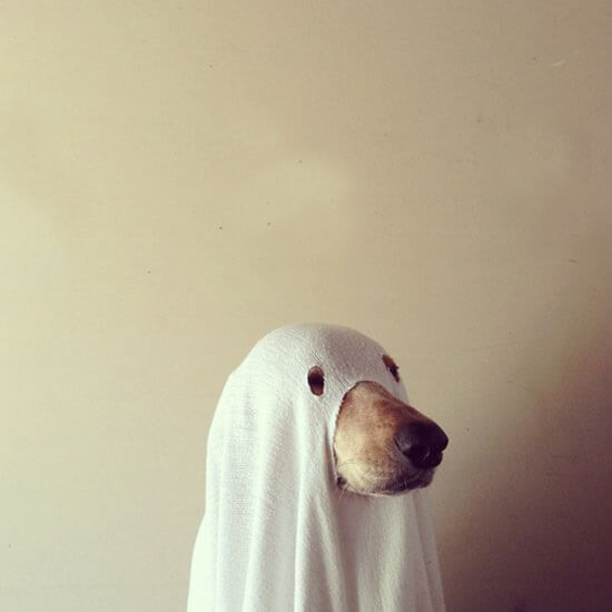Dummy Product - Phantom Dog