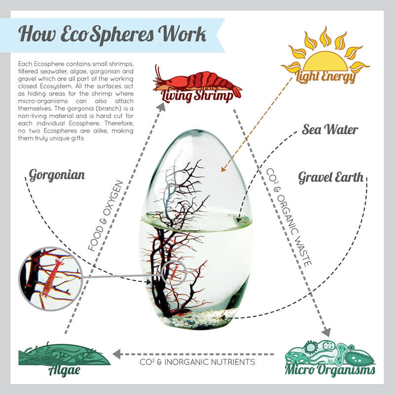 EcoSphere - Small