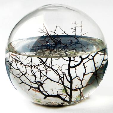 EcoSphere - Medium