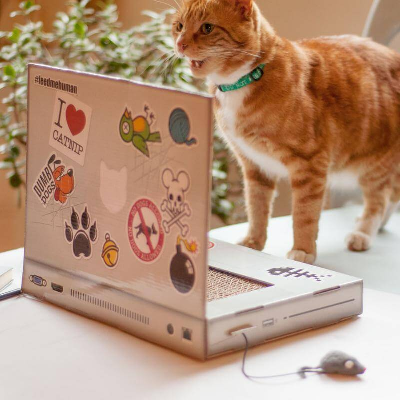 Kitty Laptop