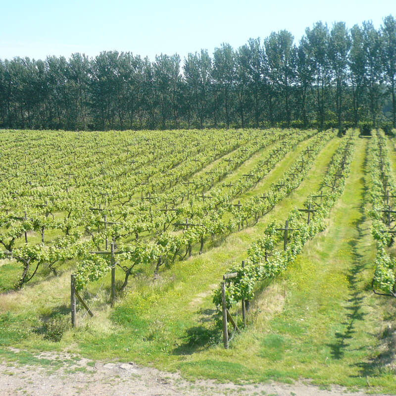 Vineyard Tour and Tasting - with Lunch - for Two
