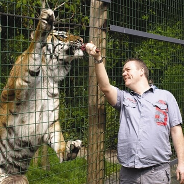 Feed the Big Cats by Hand (Weekdays)