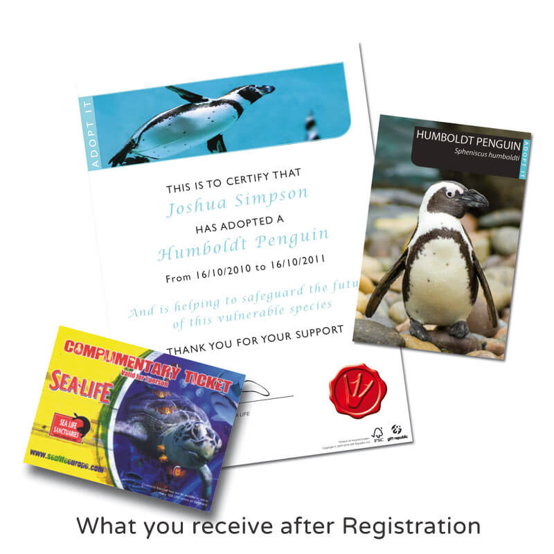 Adopt a Penguin Pack